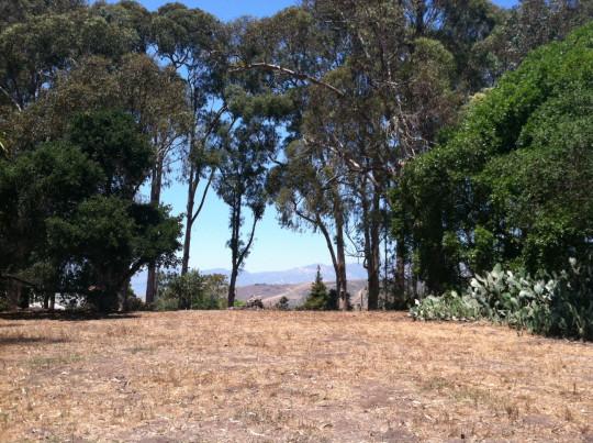 mountainview-blog