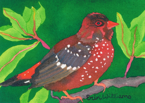 StrawberryFinch-web